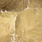 Mulberry Paper with Teak Leaves - BEIGE