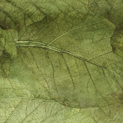 Mulberry Paper with Teak Leaves - OLIVE GREEN