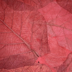 Mulberry Paper with Teak Leaves - RED